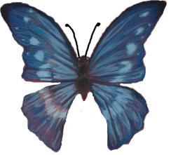 blue butterfly png