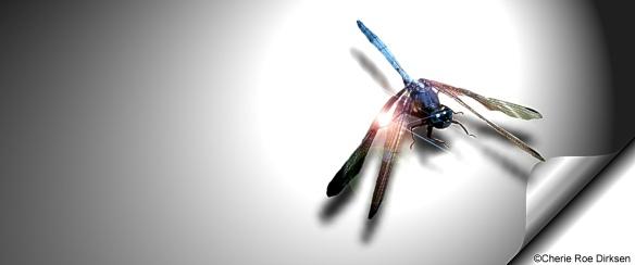 Facebook Header Dragonfly